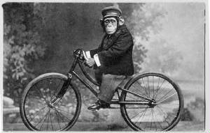 WC4/monkey_on_bicycle_vintage.jpg